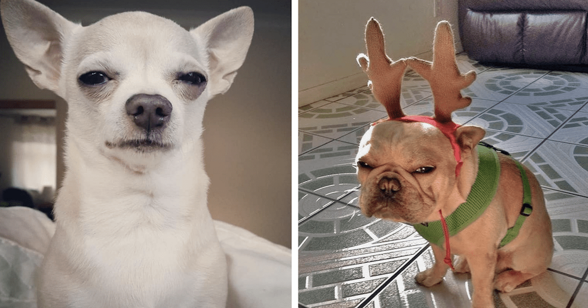 Disapproving Dogs