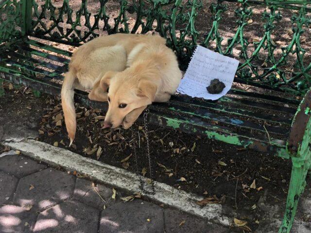 Dog Abandoned on Bench