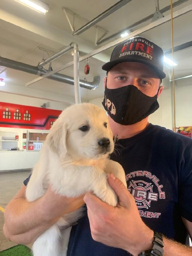 Firefighter holding puppy