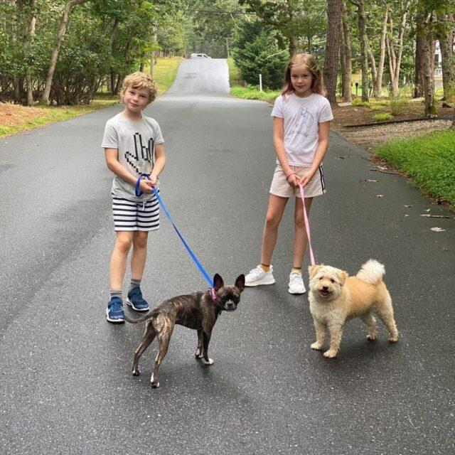 Kids walking rescue dogs