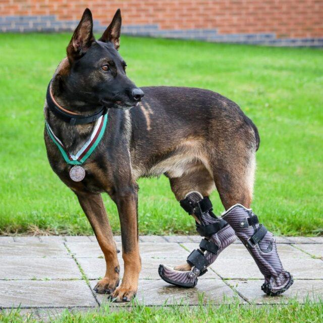Kuno hero dog