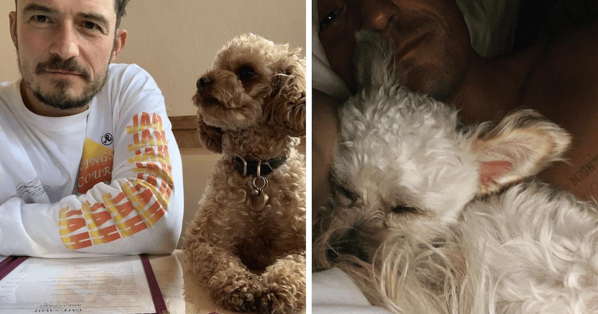 Orlando Bloom foster dog