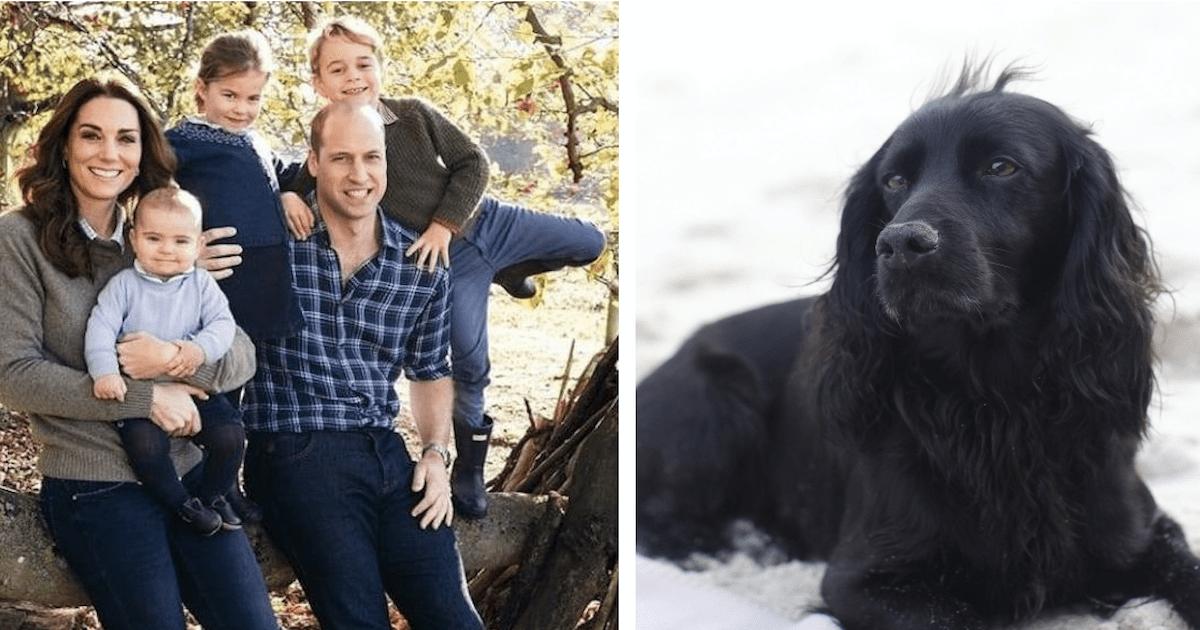 Royal family dog