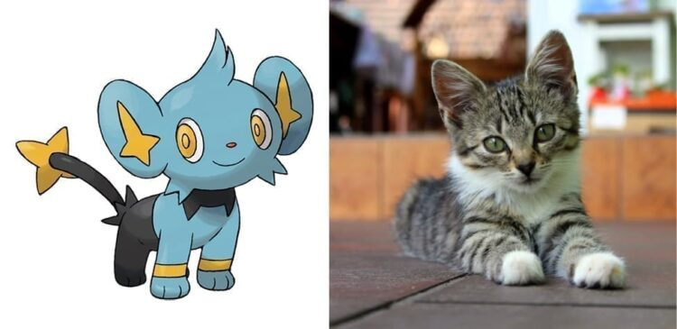 Shinx and kitten