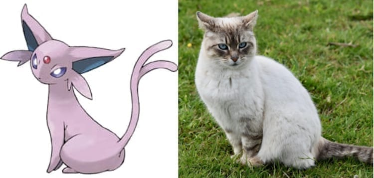 Espeon and cat