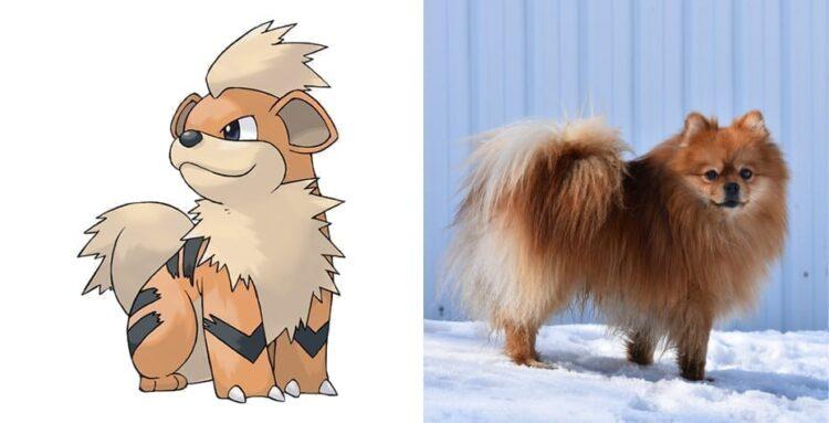 Growlithe and Pomeranian