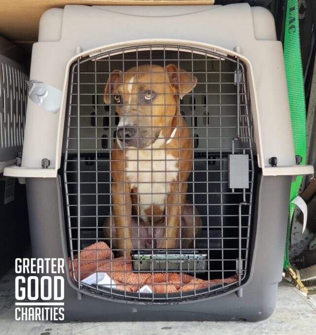 Over 600 Rescue Dogs Are Flown Out Of Overcrowded Hawaii Shelters