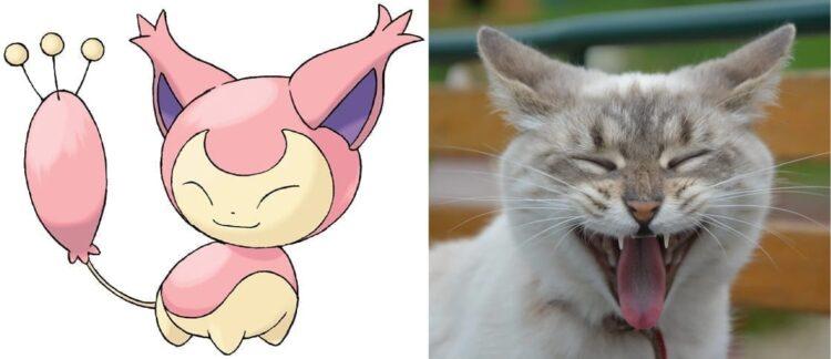 Skitty and Kitten