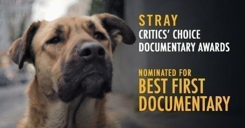 stray documentary cover