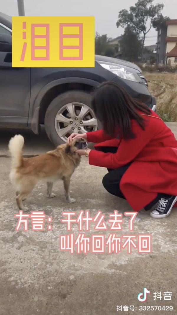 Bride petting dog
