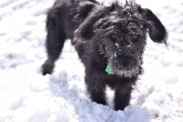 Dog Abandoned in Snow