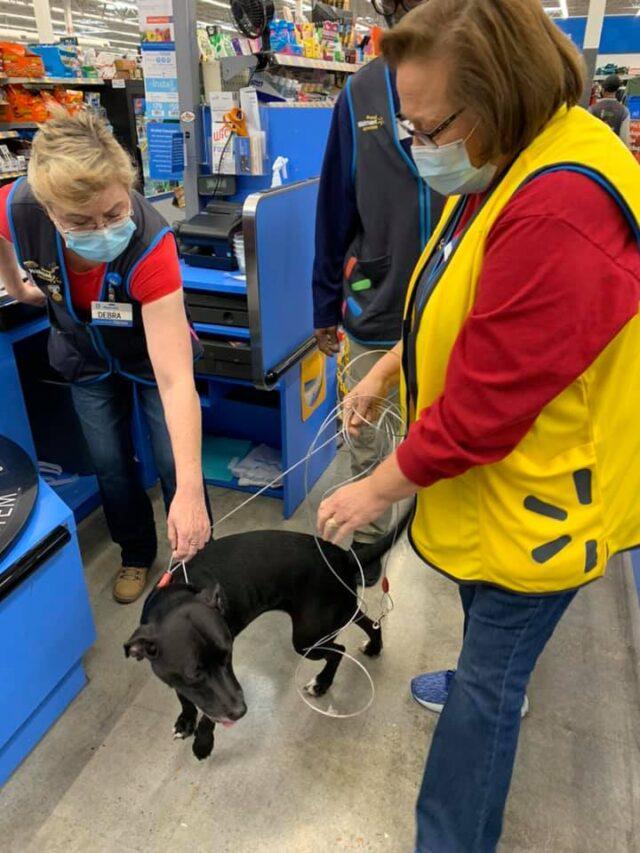 Dog Reunited at Walmart