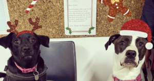 Shelter Dogs Letters to Santa