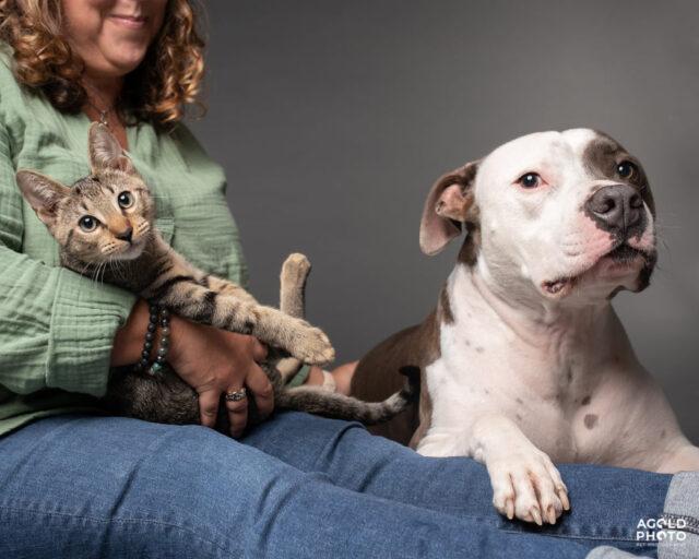 Pit Bull, Kitten, and Mom