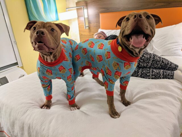 Pit Bulls Matching Pajamas