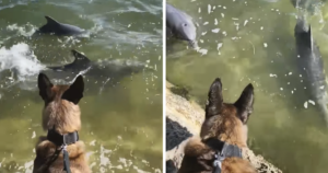 Police Dog and Dolphin Friends