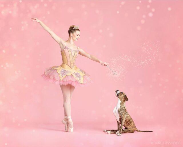 Rescue Dog Ballet