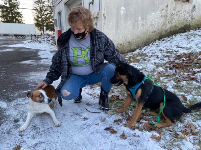 Rescue dogs reunited