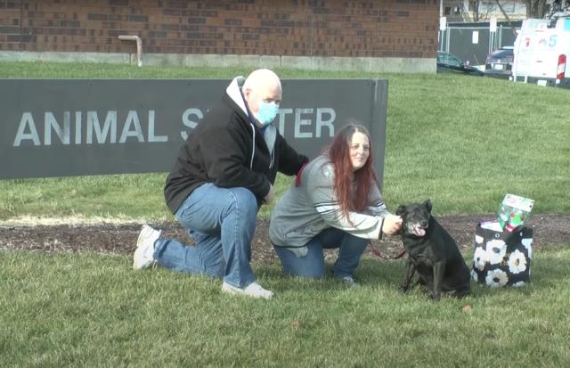Service Dog Reunited