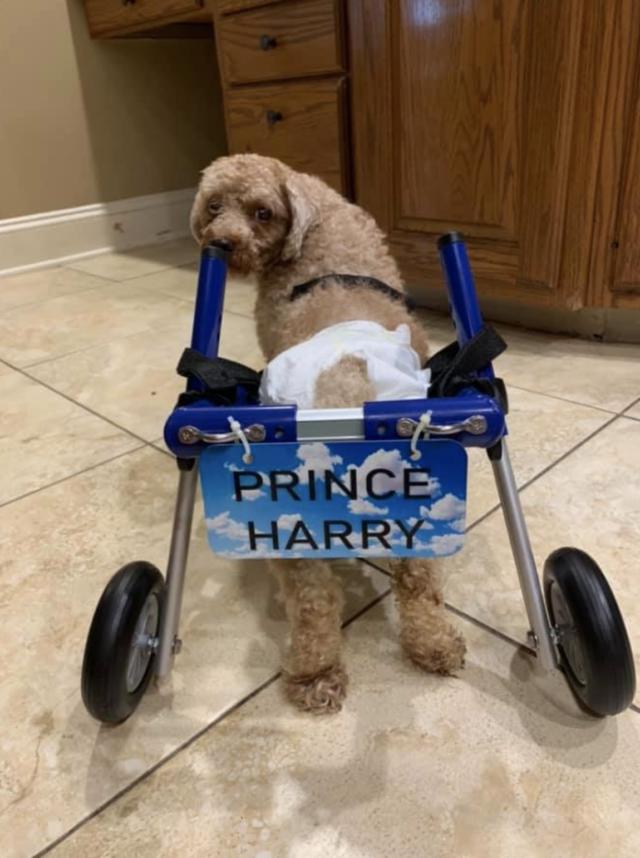 Teddy Bear Wheelchair