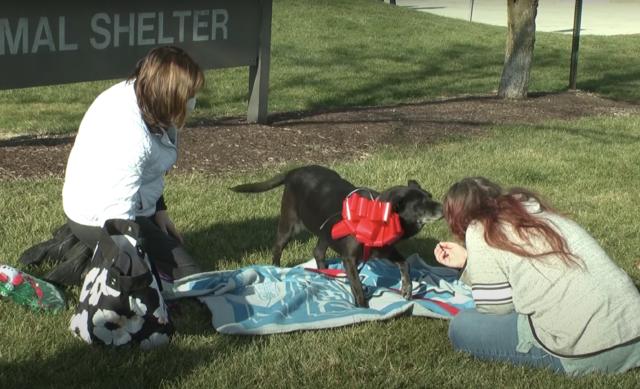 Woman Reunites with Service Dog