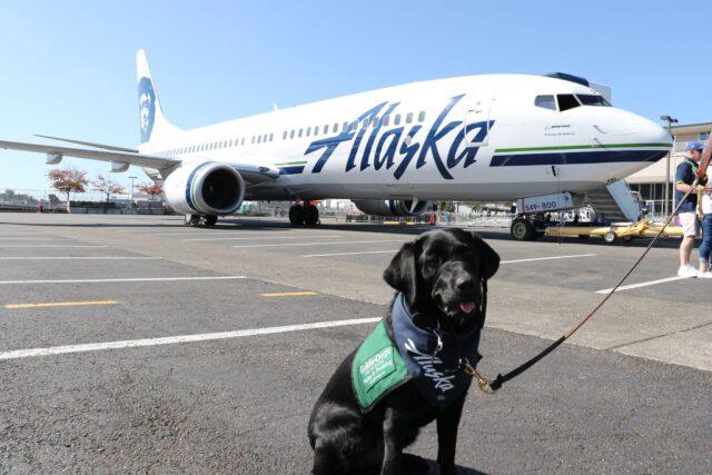 service dog Alaska flight