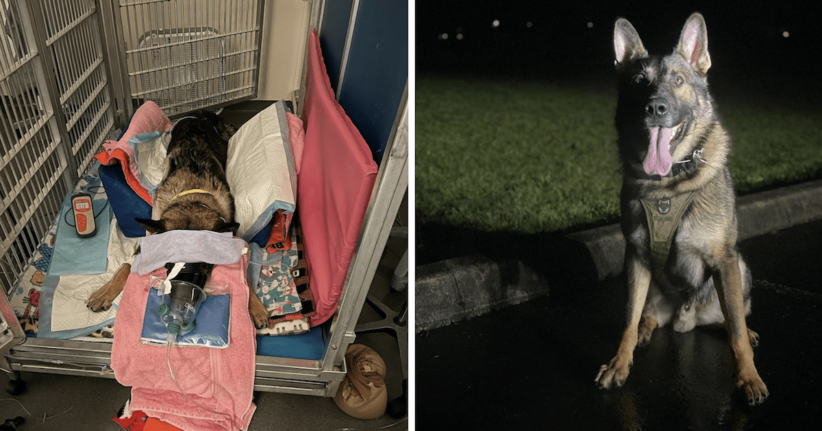 Police Dog Recovery