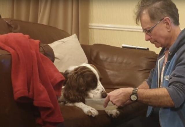 Dog feeding senior dog