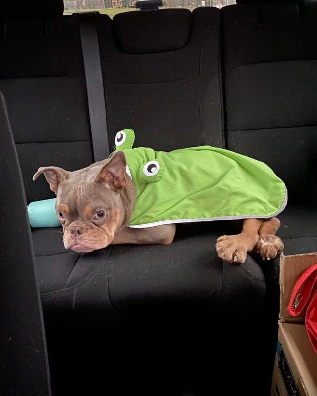 Dog Froggy Rain Coat
