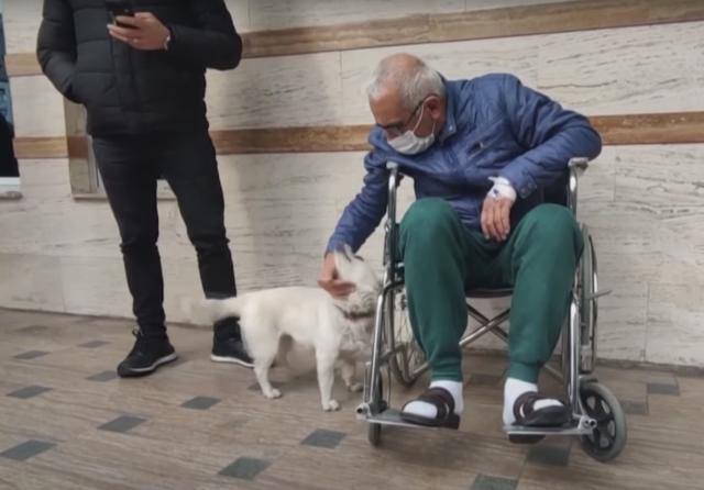 Dog and dad reunited at hospital