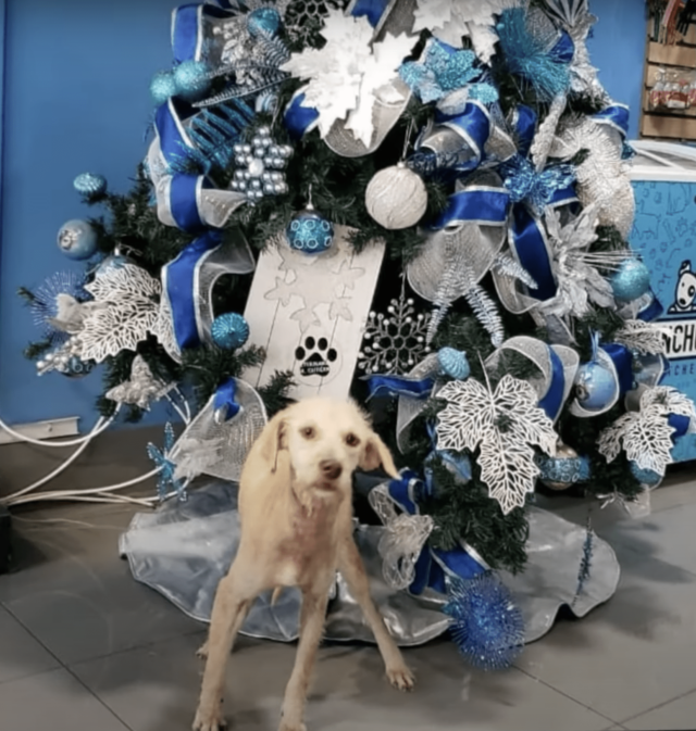 Dog by Blue Christmas Tree