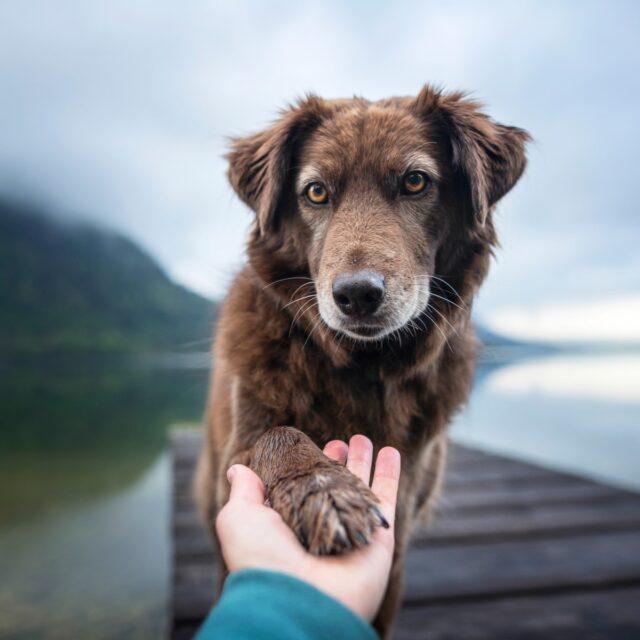 Dog holding hand