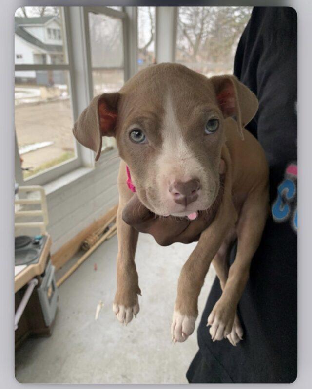 DoorDash Puppy Stolen