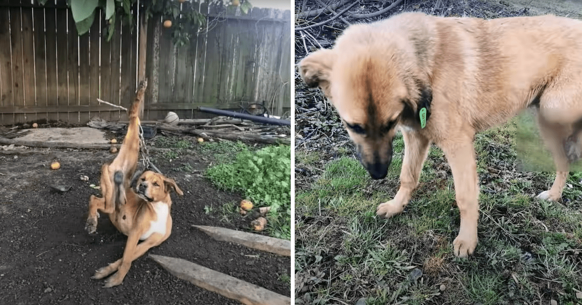 Dog Tied to Tree Abuse