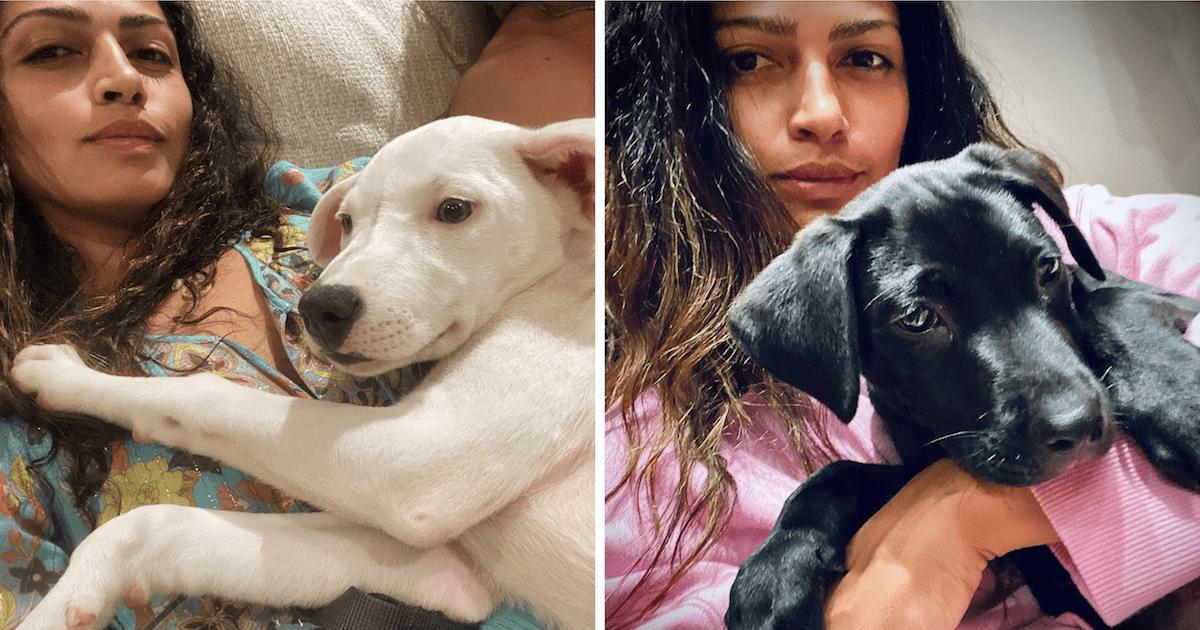 McConaughey Rescue Puppies