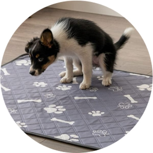20% Off Potty Pad Products