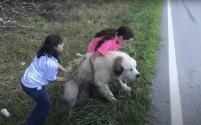 Rescuing Dog on Roadside
