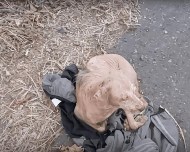 Stray dog on jacket