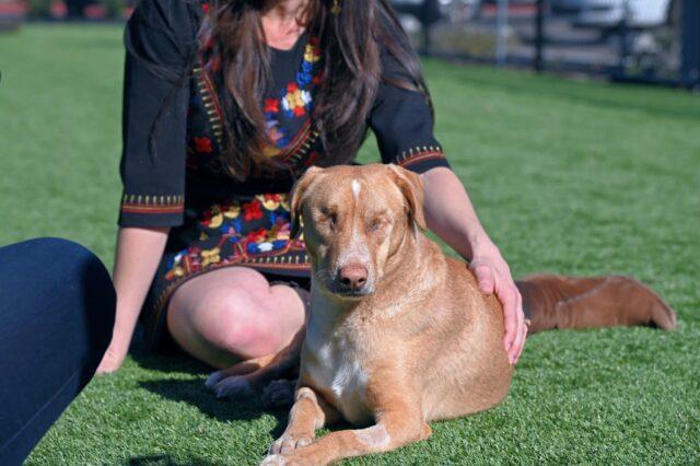 Blind dog being pet