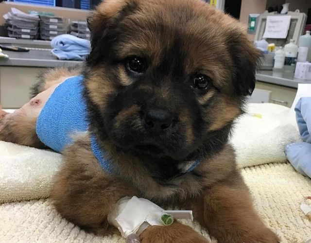 ellie rescue story