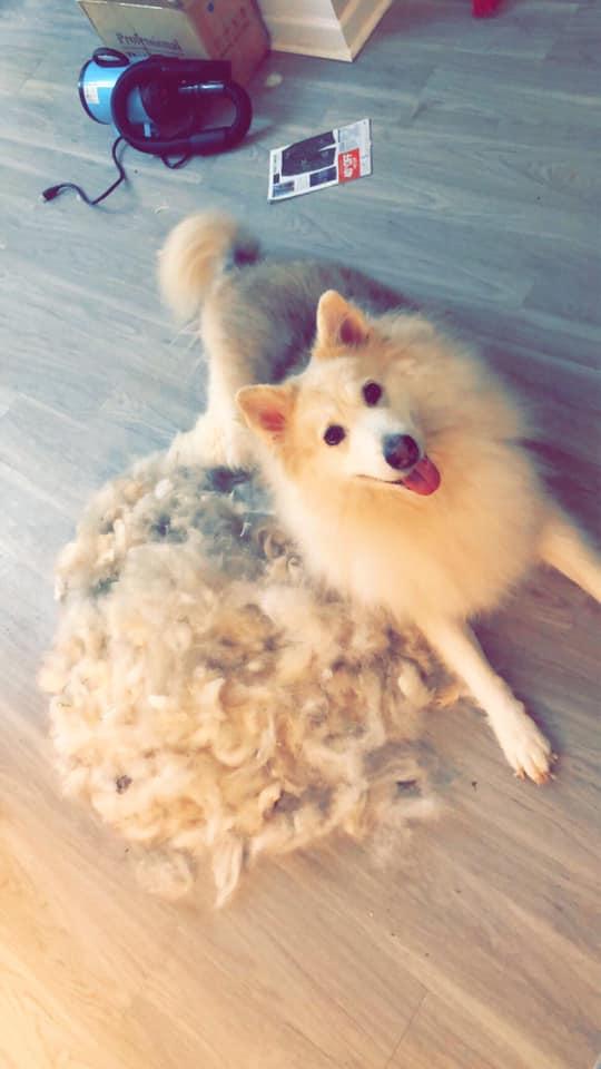 dog-fur-pile