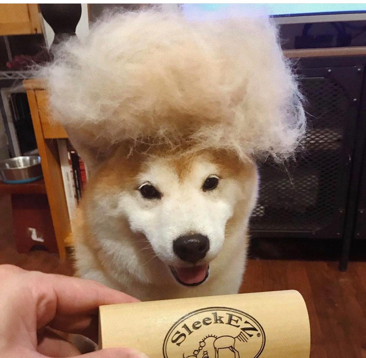 dog-fur-wig