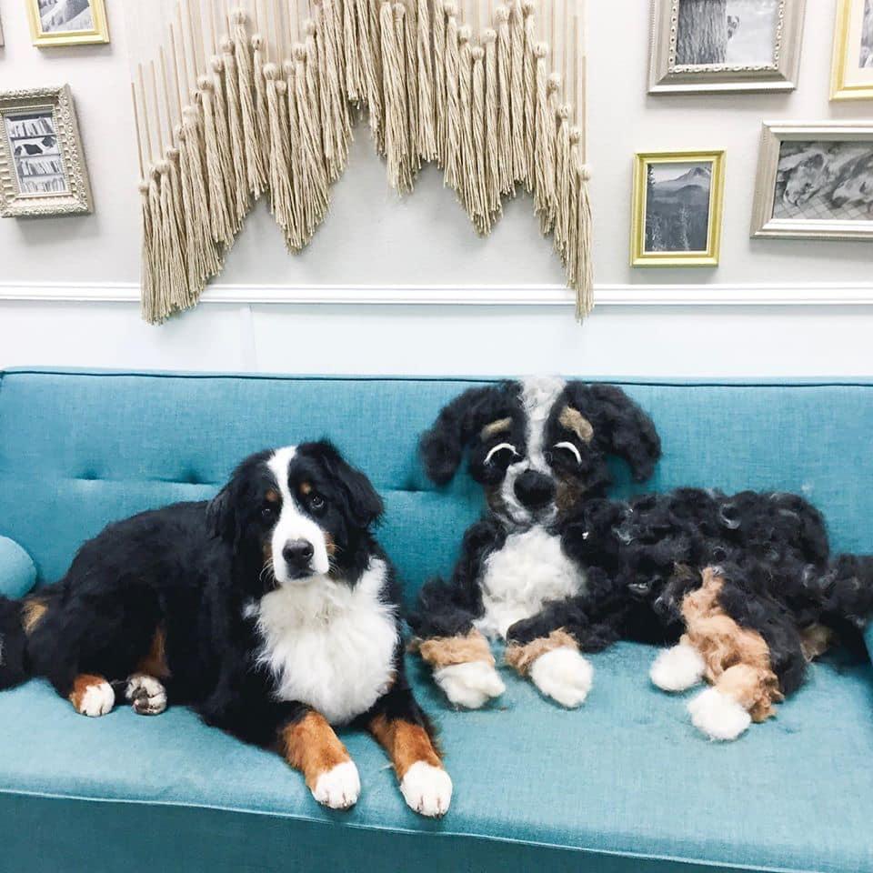 funny-dog-shedding