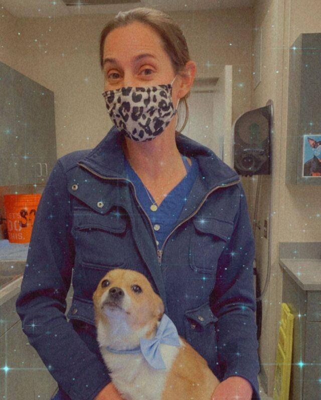 Chihuahua amputee and life saving veterinarian