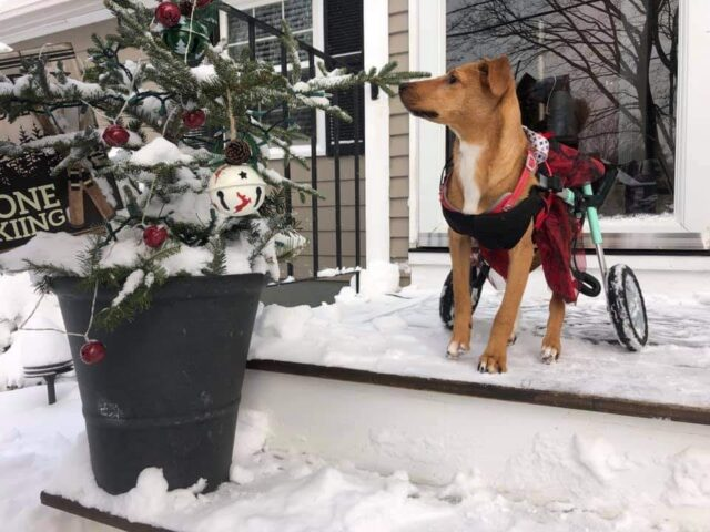 Courage in the snow