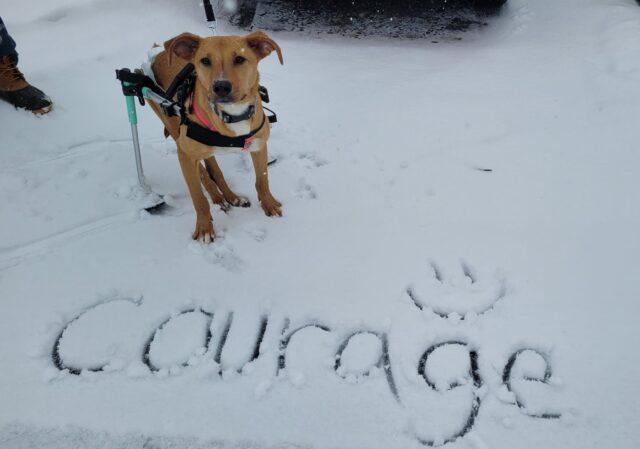 Courage wearing skis