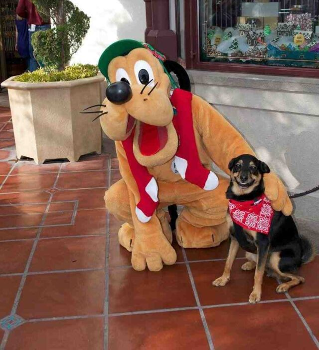 Dog meets Pluto
