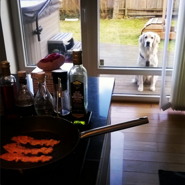 Dog is waiting for bacon