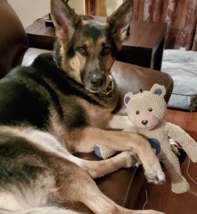 German Shepherd Cuddling Stuffed Animal