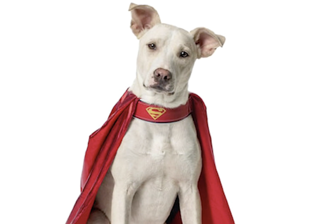 Krypto Superboy Dog
